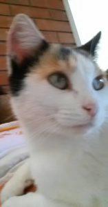 Andy Tu's Cat